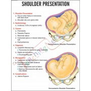 Shoulder Presentation Photo-laminated board Chart  (51×66cm)