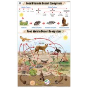 Food Chain in Desert Ecosystem Chart (58x90)