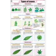 Types of Leaves Chart (58x90cm)
