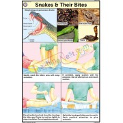 Snakes and their Bites Chart (50x75cm)