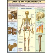 Joints of Human Body Chart (70x100cm)